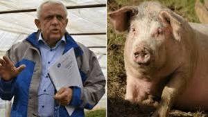 Impozit pe porci – proiectul lui Petre Daea